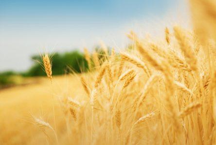 Un rendez-vous de la relève agricole à Dolbeau-Mistassini