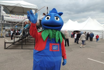 Le Festival du Bleuet annule son édition 2020