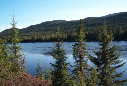 Dolbeau-Mistassini et la MRC adoptent une déclaration sur la forêt