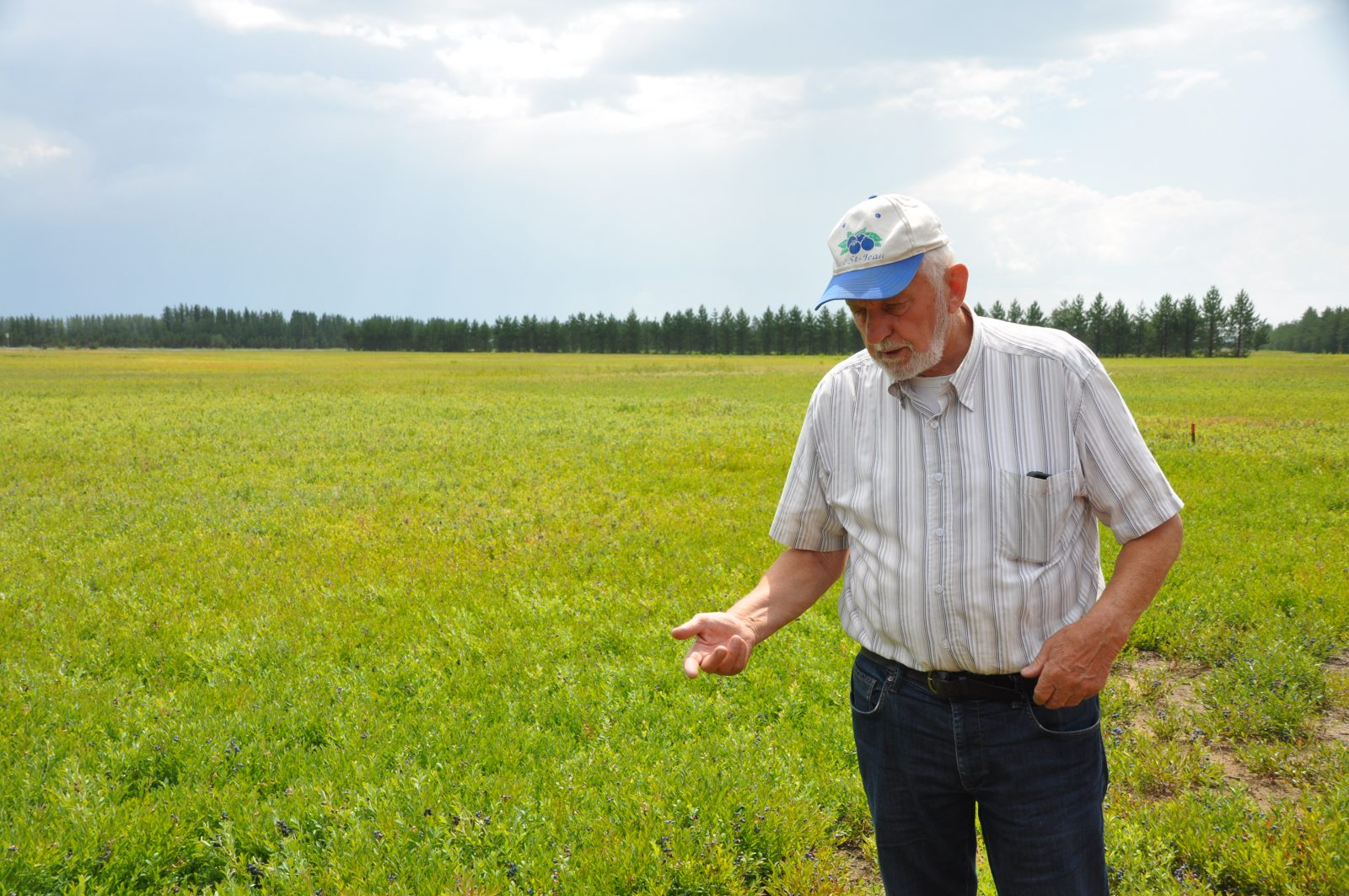 Vers une récolte catastrophique à la Bleuetière Ticouapé