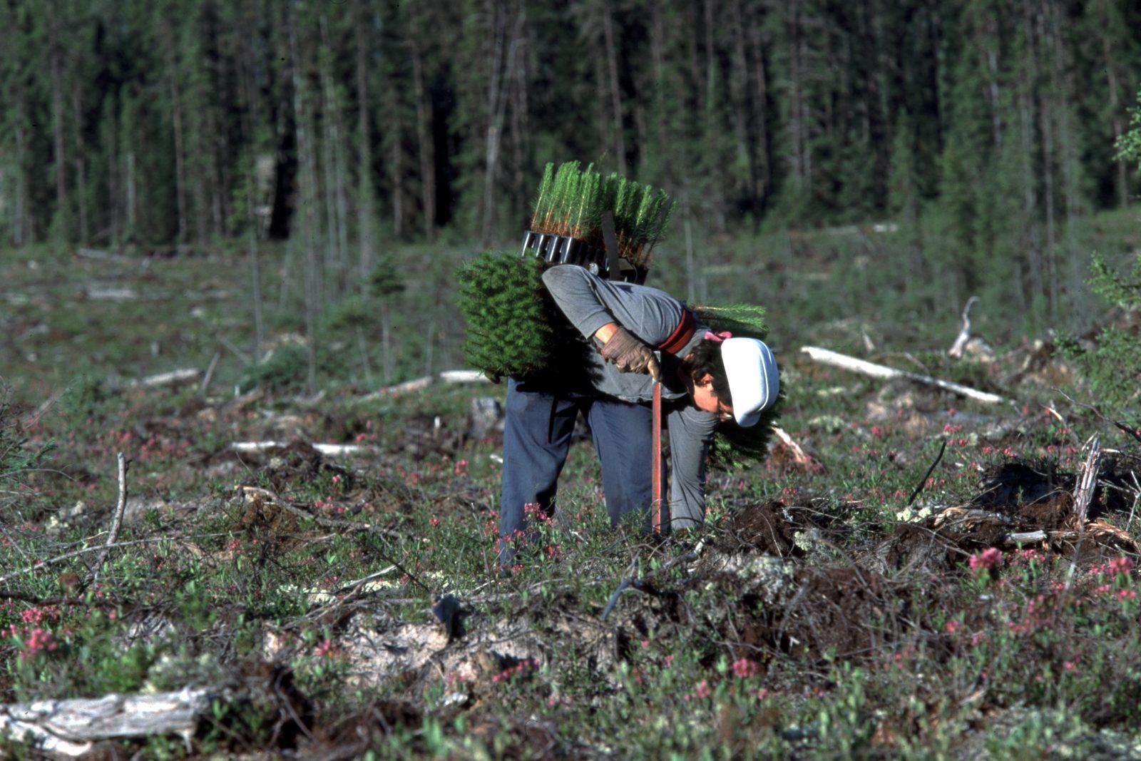 La Coopérative forestière de Girardville a repris ses assises