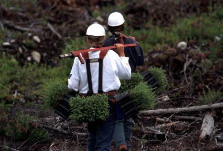 Main-d'oeuvre : la Coopérative forestière de Girardville explore tous les moyens