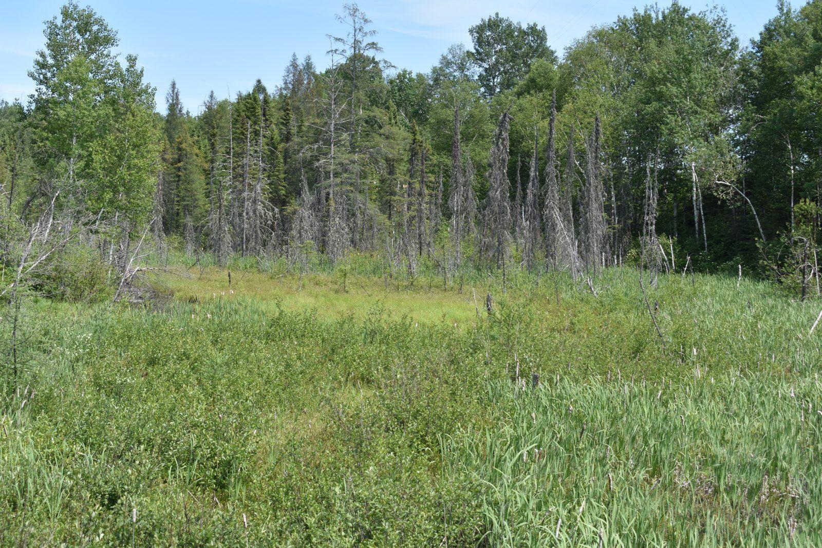 Protection des milieux humides : des projets bloqués à Dolbeau-Mistassini