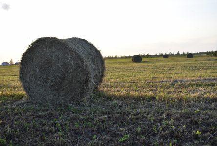 Portes ouvertes sur les fermes du Québec : à la rencontre de nos producteurs!