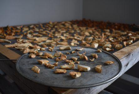 PFNL : Les épices plus intéressantes que les champignons