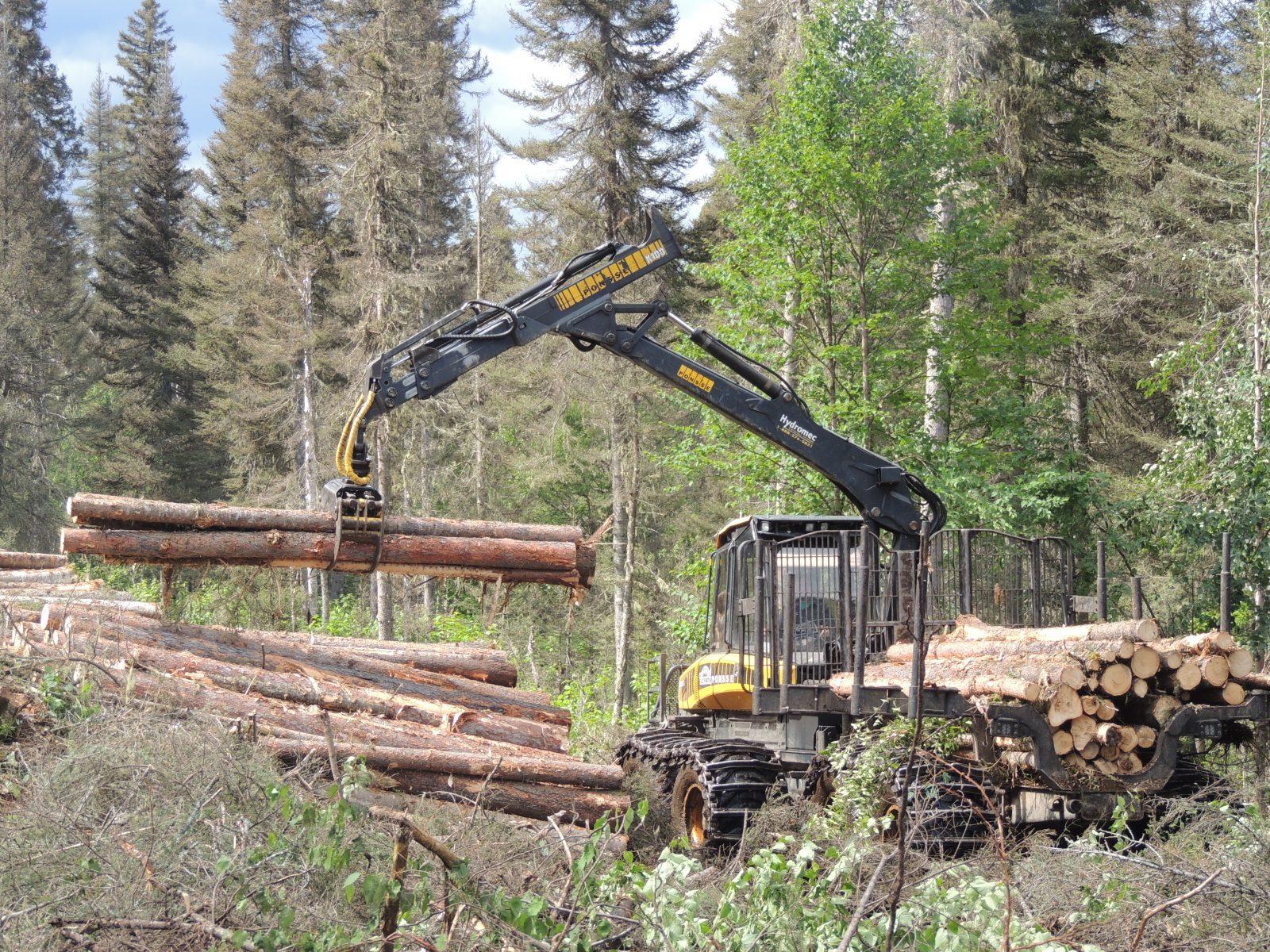 Secteur forestier : Les nouvelles mesures économiques ne seront pas suffisantes