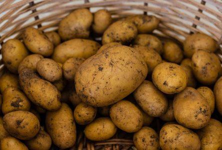 Kiosque sur la 169: jusqu'à 150 000$ de pommes de terre