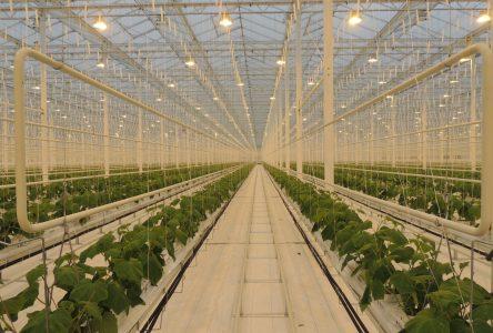 Transformateurs alimentaires : investissement fédéral de 380 000 $