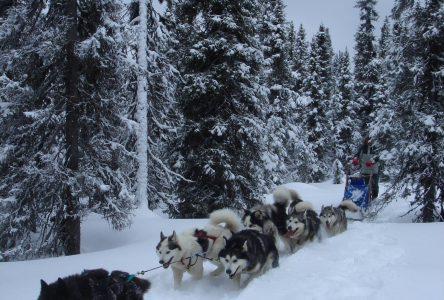 Aventuraid/Parc Mahikan : se réinventer pour passer l'hiver