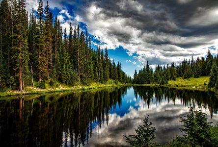 Forêt et bois, une culture à retrouver