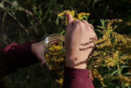 Le Cégep de St-Félicien c'est… Des projets en développement durable comme une « fleur éternelle »