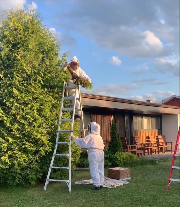 Un essaim d'abeilles offre tout un spectacle à des résidents de la rue des Noyers
